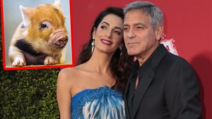 george clooney amal pig adoption